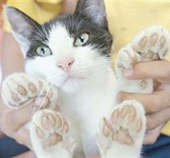 Kedi Tırmık Hastalığı