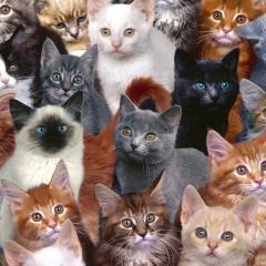 Kedilerle ilgili Gerçekler