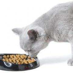 Kedilerin Beslenmesinin Temelleri