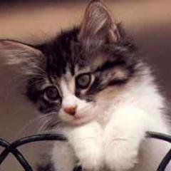 Kedilerin Hayat Döngüsü
