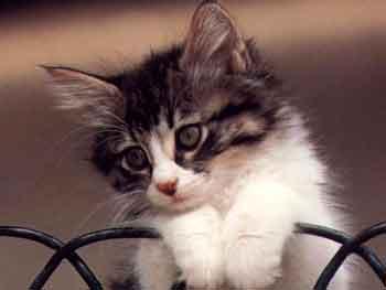 kedilerin-hayat-dongusu-01