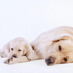 Köpekler Hakkında Yanlış Bildikleriniz
