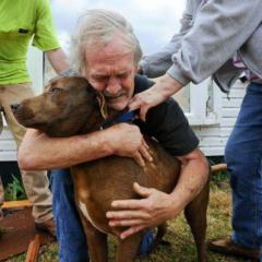 Deprem ve Köpekler