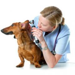 Köpeklerle İlgili Acil Durumlar