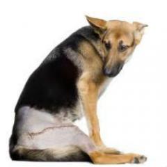Köpeklerde Kalça Çıkığı