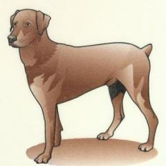 Köpeklerin Vücut Dili