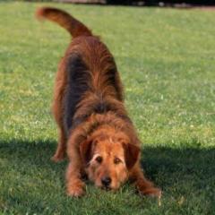 Sıcak Havalarda Pet Sahiplerinin Dikkat Etmesi Gereken Konular