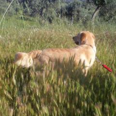 Köpeklerde Pisi Pisi Otu Sorunları