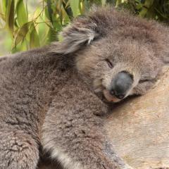 Hayvanlarda Uyku
