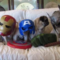 Yenilmez Puglar!