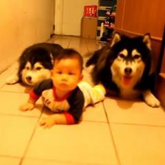 Bebekle Emekleyen Sevimli Köpekler