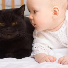 Bebekler ve Kediler