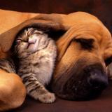 Kedi ve Köpeklerin Şaşırtan Dostlukları