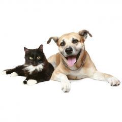 Kedi ve Köpeklerde Göz Akıntısı Nedenleri