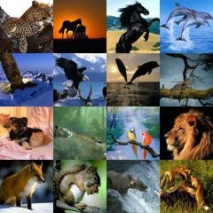 """"""" Hayvanları Koruma Kanunu """" Tüm Hükümleri"""