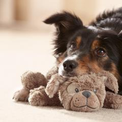 Köpeğinize Oyuncak Seçerken Bunlara Dikkat Edin!