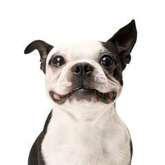 Köpek Sağlığında 20 Altın Kural