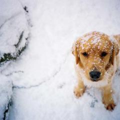 Karda Kayan Köpeklerin Keyfi