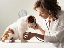 kopek-ve-veteriner