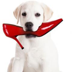 Köpeklerde Eşya Kemirme