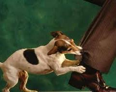 Köpeklerde Isırma