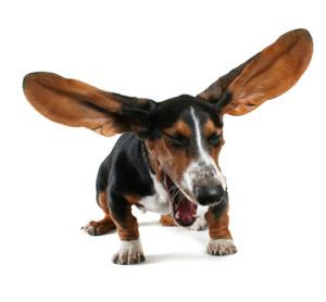 kopeklerde-kulak-hastaliklari-02