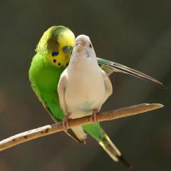 Kuşların Davranışları