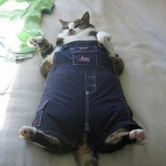 Kedilerde Obezite