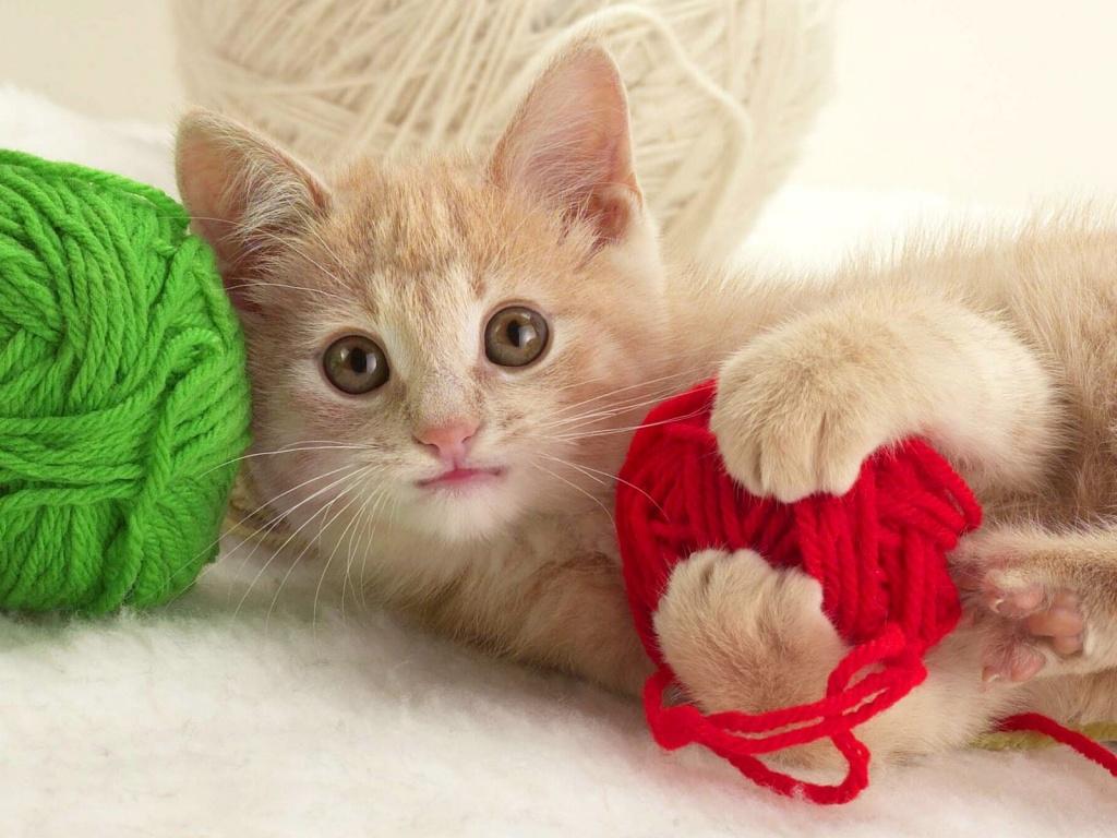 Kedilerin Kalbi Kırılır Mı