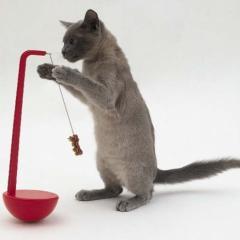 Kedinizin Sıkılmaması İçin Öneriler