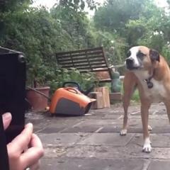 Akordiyonla Şarkı Söyleyen Köpek