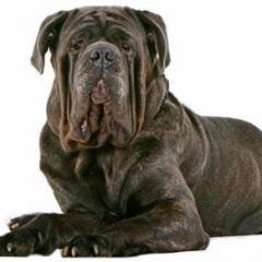 Köpeklerde Yaşlılıkta Görülen Sorunlar