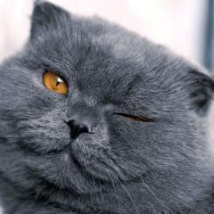Dünya Kediler Günü'nüz Kutlu Olsun