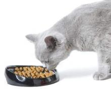 hamile-kedi-beslenmesi