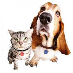 Vets & Pets Veteriner Kliniği – Halkalı