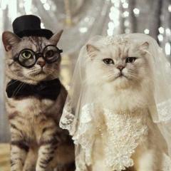 Kediler Sadece Mart'ta mı Çiftleşir?