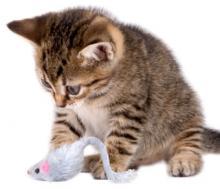 kedilerde-oyuncak-secimi-02