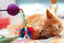 kedilerde-oyuncak-secimi-03