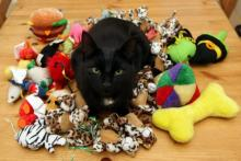 kedilerde-oyuncak-secimi-05