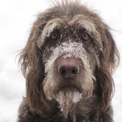 Köpekler İçin Soğuk Kış Günlerindeki Tehlikeler