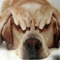 Köpeklerde Korku