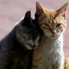 Sokak Kedisini Ev Yaşamına Alıştırma!