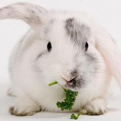 Yavru Tavşanların Beslenmesi