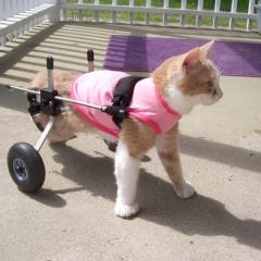 Engelli Bir Kediyle Yaşamak