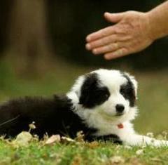 Sağır Köpekle Yaşamak