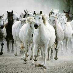 Atlar Hakkında